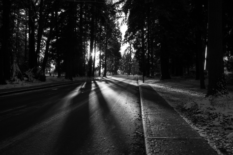 road_trees_sun_bw