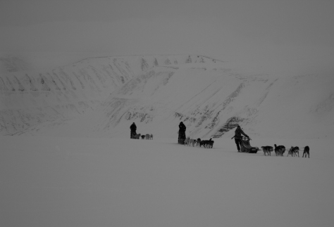 Svalbard_scott_turnerbreen_dogsleds
