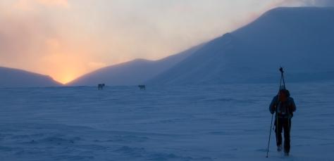 Svalbard_reindeer_sunset_Jelte3