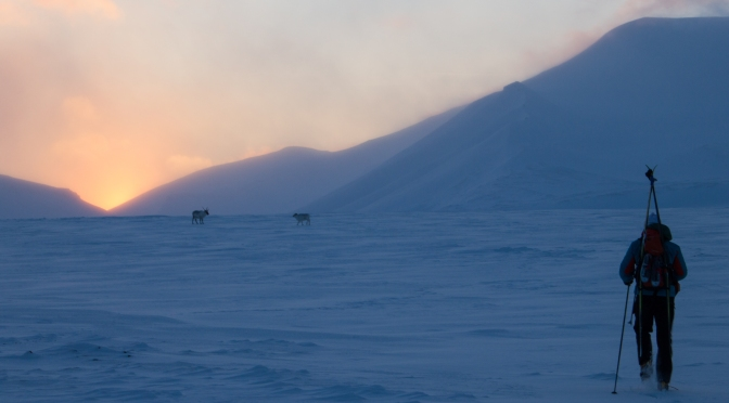 Svalbard Part 3: In search of Sun