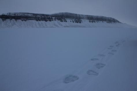 Svalbard_Tunabreen_polar_bear_tracks-2